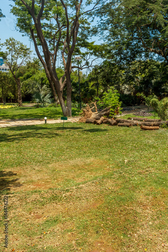 Wide view of green garden with grass, trees, plants, shadows