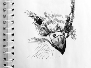 sketch of bird head