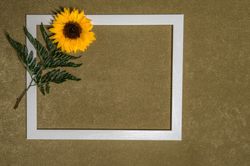 Suflower around a white photo frame