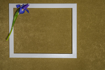 Flower and a picture frame