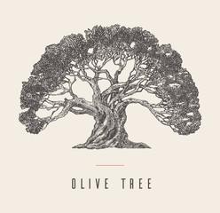 Drawn vector illustration olive tree label oil