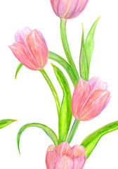 nice seamless texture with lovely tulips for your design. watercolor painting