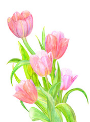 bouquet of tulips for your design. watercolor painting
