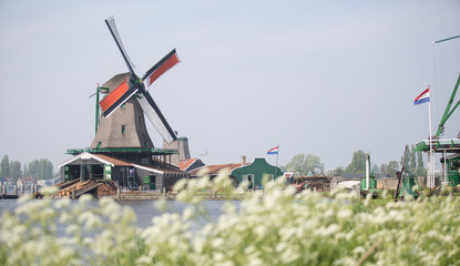 Windmill at Zaanse Schans and flora on foreground