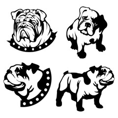 Vector set of black bulldogs head and bulldog logo Isolated on white background