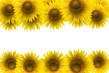Sunflower frame isolated on white background.