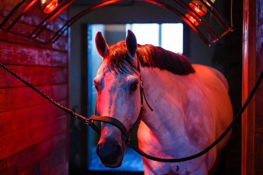 horse dry in the solarium