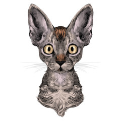 the head of a cat breed Oregon Rex symmetric, sketch vector graphics color picture