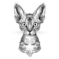 the head of a cat breed Oregon Rex symmetric, sketch vector graphics black and white drawing