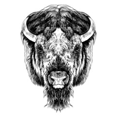 the Buffalo head is symmetrical, looks right, sketch vector graphic of a black and white image