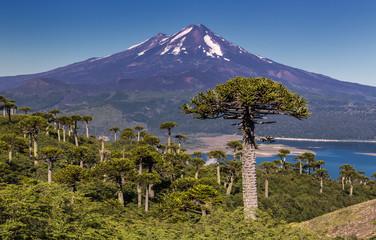 Volcano Llaima at Conguillio N.P. (Chile)