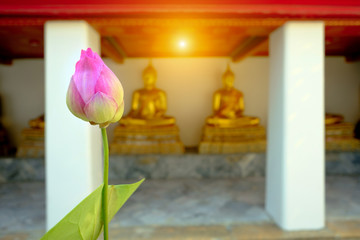 Pink lotus with blurred row of buddha gold backgroud