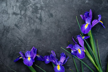 Bouquet of violet Irises on gray background with  copy space. Top view