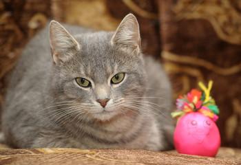 Cute gray striped cat portrait.