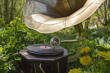 vintage gramophone in the garden grass among the wild flowers