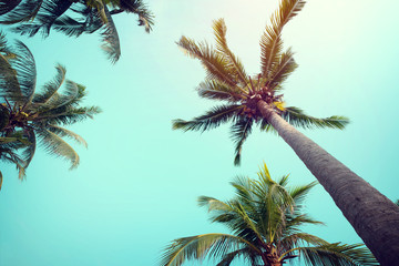 Landscape of palm trees at tropical coast, vintage effect filter and stylized