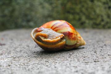 closeup snail on the concrete floor background