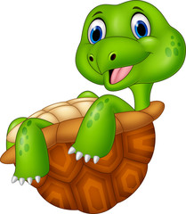 Cartoon turtle relaxing isolated on white background