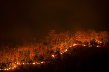 Wildfire line on hill at night, red flowers destroy everything
