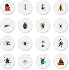 Realistic Midge, Poisonous, Emmet And Other Vector Elements. Set Of Animal Realistic Symbols Also Includes Spinner, Tarantula, Gnat Objects.