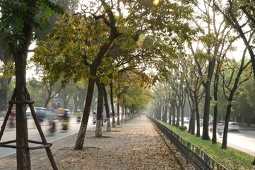 Peaceful and colorful lined trees path in the changing time of season in Hanoi, Vietnam, Asia