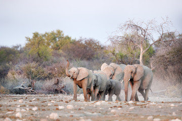 Elephants marching towards a water hole.