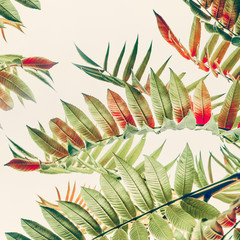 Wall Mural - Green red Tropical or  jungle leaves on light pastel background, close up, nature background