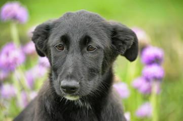 Black puppy for a walk