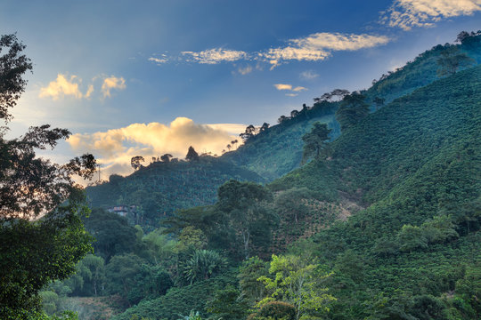 Clouds are illuminated during the sunrise at a coffee plantation near Manizales, Colombia.