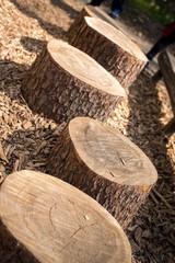 Tree Log Stumps