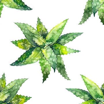 Watercolor aloe vera pattern. Illustration on white background
