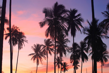 Summer tropical backgrounds  with  coconut Palm tree at sunset , summer time concept
