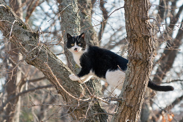 frightened black and white cat sits on a high tree