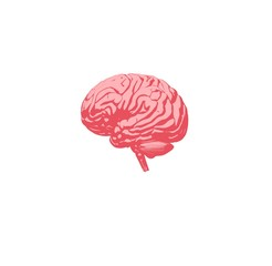 Brain infographic. Anatomical icon of brain on white background. Illustration.