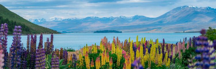 Aluminium Prints Blue Landscape at Lake Tekapo Lupin Field in New Zealand
