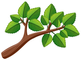 Tree branch with leaves
