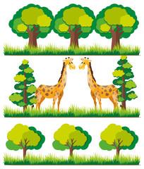 Giraffe in the park