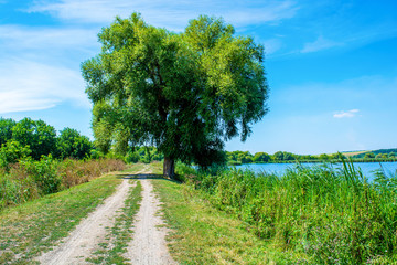 Photo of willow tree near beautiful blue lake with road