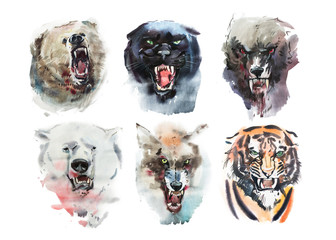 Watercolor drawing animal portrait on white background.