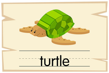 Flashcard for word turtle