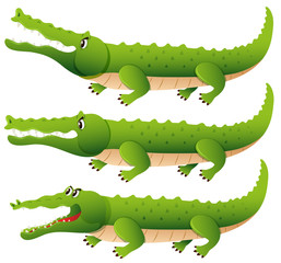 Crocodile in three different actions