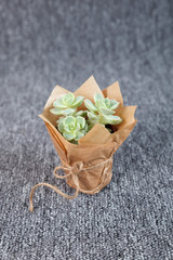 Succulent plant isolated on grey background