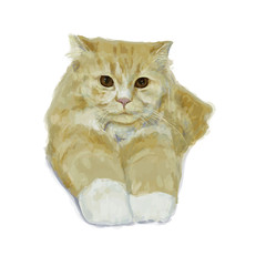 Adorable persian cat lying and stretching leg on white background
