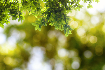 Green leaves hanging