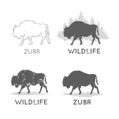 Buffalo Silhouettes Wildlife hand draw. Hunting, travel, wild nature, survival. Retro, vintage.