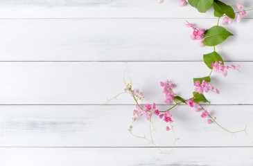 Mexican Creeper pink flower on white wood background