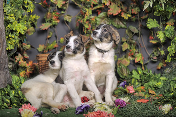 Three puppies on green background Stock Photos