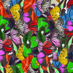 Abstract background made from butterfly wings