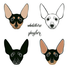 Miniature Pinscher. Vector set of  pinscher's face. Hand-drawn vector illustration on a white background. Sketch, four isolated variants.