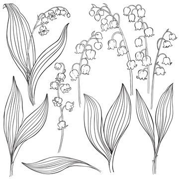 Lily of the valley. Vector illustration, isolated floral elements for design. Contour monochrome illustration isolated on white background.